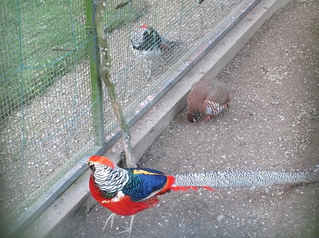 Ренн парк птички